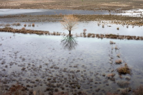 Trees and crops submerged by the overflow of the river Trebisnjica. Popovo Polje, Bosnia and Herzegovina 2010. © Matteo Bastianelli