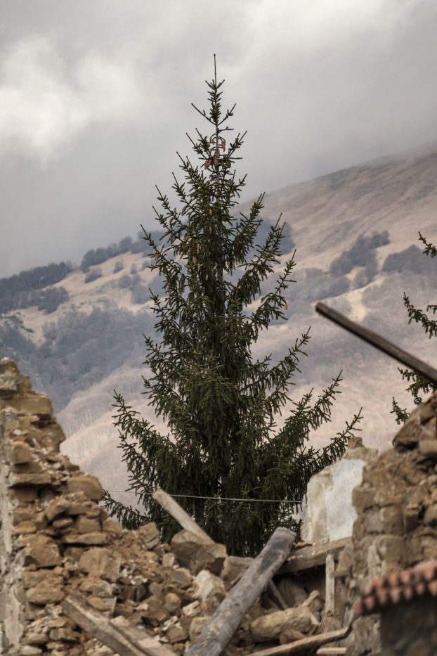 """A fir-tree between the ruins of some buildings destroyed by the earthquake that took place on August 24. Amatrice, Italy 2016. © Matteo Bastianelli for """"La Stampa"""""""