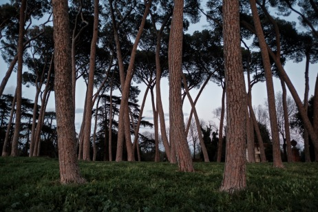 A pine forest of a municipal park where many young men usually go to smoke cannabis for recreational purposes. Rome, Italy 2017. © Matteo Bastianelli