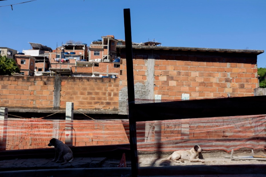 Two dogs in the vicinity of a building under costruction in the favela of Pavão-Pavãozinho, on the hills of Rio de Janeiro, Brazil 2015. © Matteo Bastianelli
