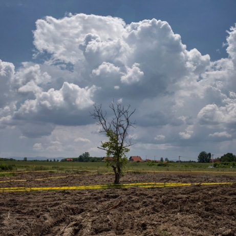 A tree in the middle of a delimited area where Norwegian People's Aid deminers are working on mine clearance operations. Brčko District, Bosnia and Herzegovina, 2014.