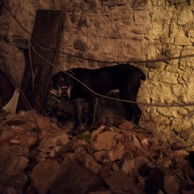 A dog left among the ruins of his home. Castelsantangelo sul Nera, Italy 2016. © Matteo Bastianelli