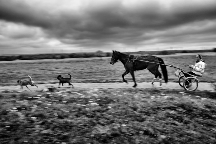 Vittorio Fornaro training one of his horses at his farmhouse, where he decided, together with his brother, to plant two hectares of hemp. Taranto, Italy 2016. © Matteo Bastianelli