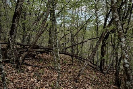 A forest on Strandja Mountain. Yasna Polyana, Bulgaria 2017. © Matteo Bastianelli
