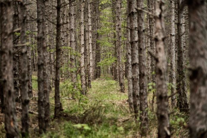 A forest in the vicinity of the Nestinarka camp-site. Tsarevo, Bulgaria 2017. © Matteo Bastianelli